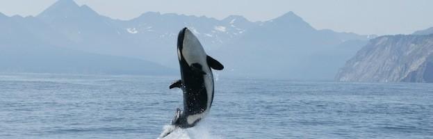 Hábitat y Distribución de las Orcas