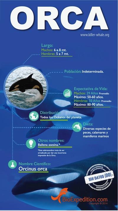 orca 400